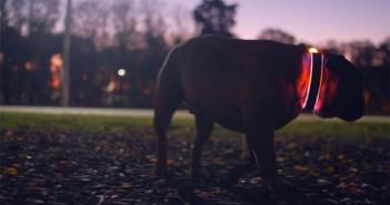 Buddy- perro- collar-LED- mascota