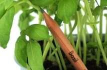Sprout, plantas, lápices