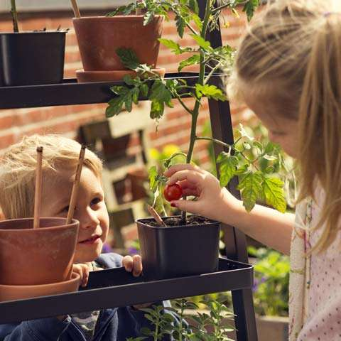 Sprout, lápices, plantas